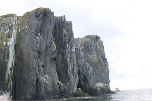 The beautiful cliffs of the Isle of May