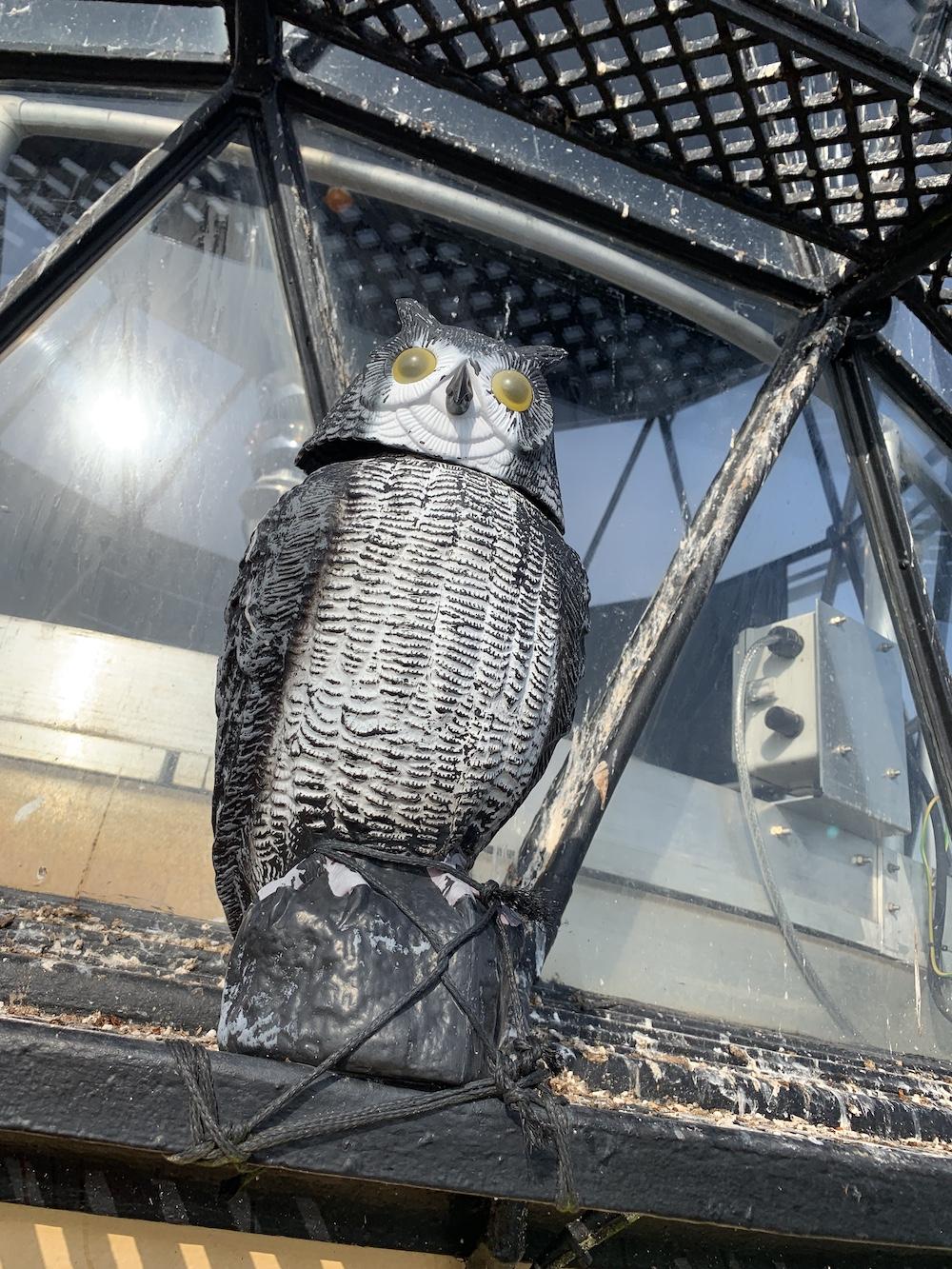 Scurdie Ness owl